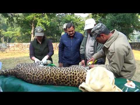 Rajaji National Park | Rajaji Tiger Reserve- Famous for Elephant and Tigers