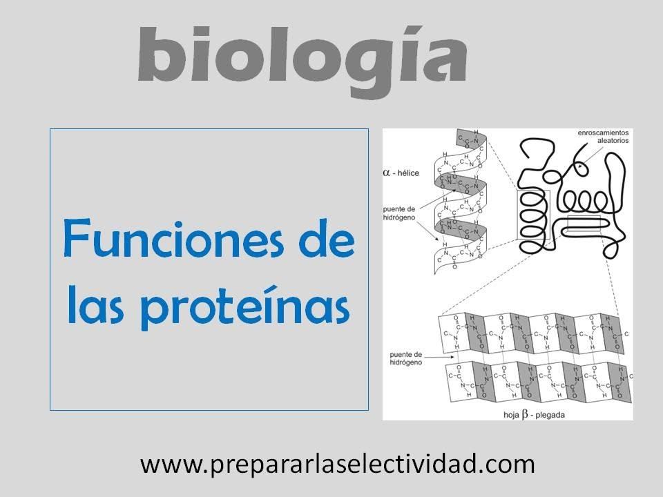 Funciones de las proteínas - YouTube