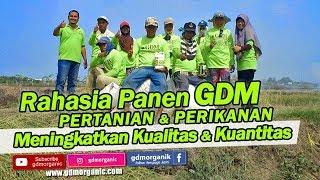 Pupuk Bawang Merah Organik GDM 1Liter