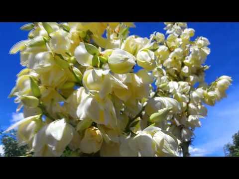 Breathing ASMR Poem Nature