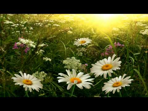 Relaxing New Age - Guitar and Piano Instrumentals -  The Promise of Spring
