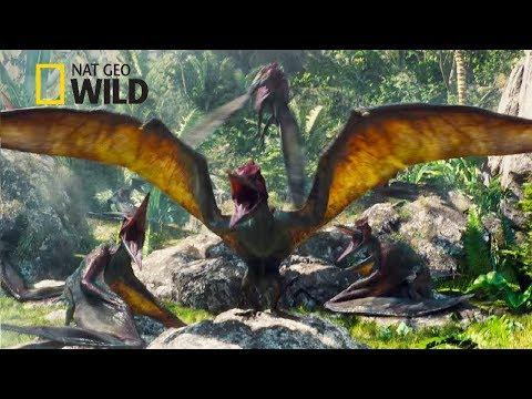 Pterodactyl Dinosaur [National Geographic Documentary 2017 HD]