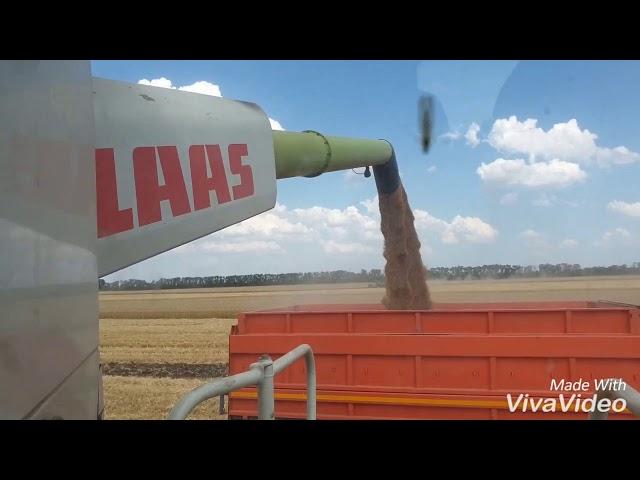 Результаты фунгицидной защиты озимой пшеницы СПК СК Родина, Усть-Лабинский район