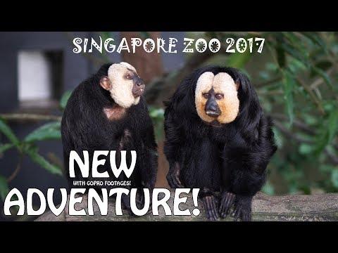 SINGAPORE ZOO 2017