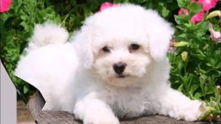ТОП 10   Самых красивых собак