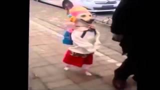 بالفيديو .. عام دراسي جديد للكلاب في اليابان