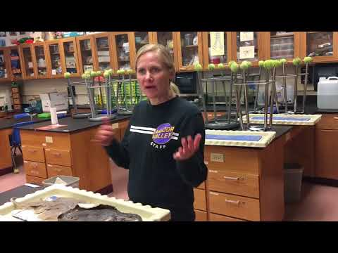 Zoology Course Video