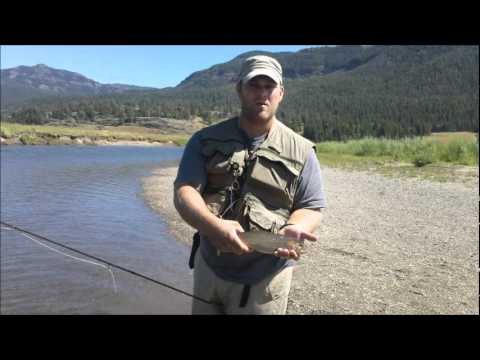 slough creek yellowstone fly  fishing trip 2011