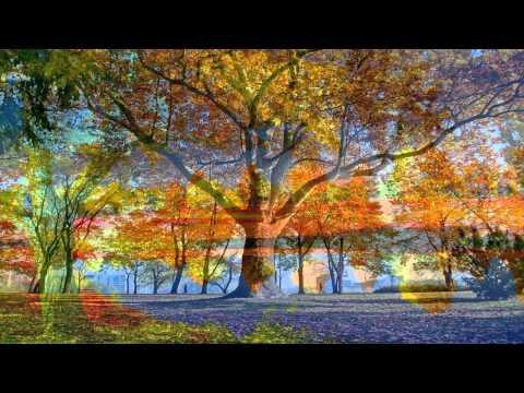 Самая Красивая Природа Осенью под Музыку Саксафона /Краски Осени