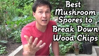 Best Mushroom Spores to Break Down Wood Chips & More Gardening Q&A