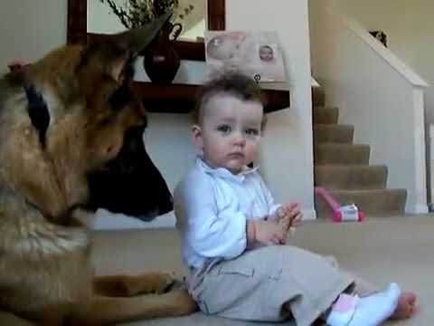 Tiny Toddler Steals Dog's Treat, German Shepherd's Reaction Stuns More Than 6 Million People
