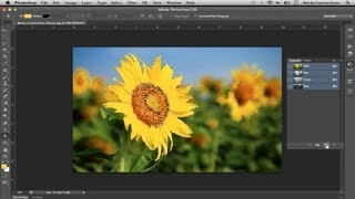 How to Color Photos of Flowers : Digital Pictures & Graphics