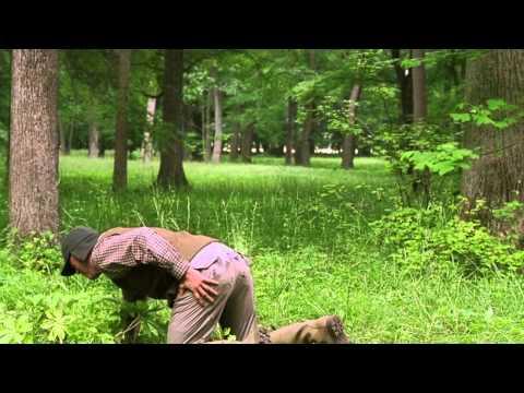 Wedding Crashers Best Scenes - Jeremy Gets Shot