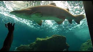 остров Крит в мае (Crete) океанариум-ущелье-летучие мыши и многое другое ...