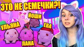 У ЙОШИ БЕШЕНСТВО?!  Roblox Guinea Pig Simulator
