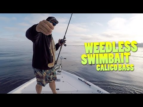 Fishing the Weedless Swimbait for Calico Bass - Yellowtail visitors