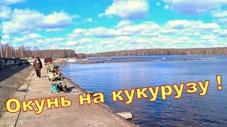 Поплавочная рыбалка в городе. Окунь на кукурузу)))