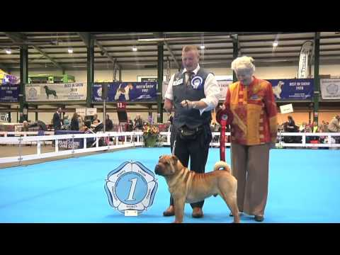 Midland Counties Dog Show 2016 - Utility group Shortlist