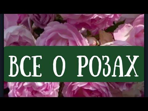 Розы в саду. Баковая смесь. Порядок смешивания препаратов в баковой смеси