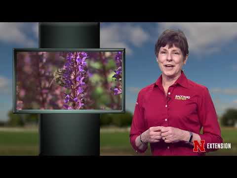 Backyard Farmer Presents Lifestyle Gardening 606