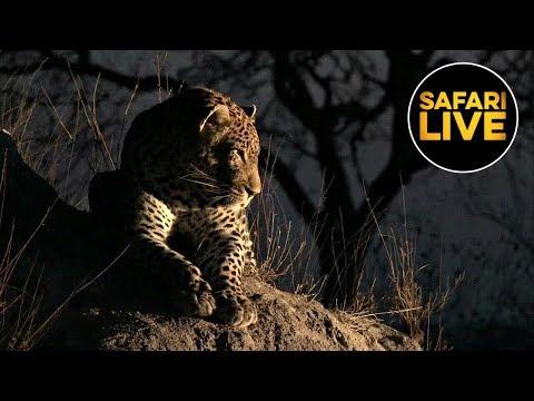 safariLIVE - Sunset Safari - August 22, 2019