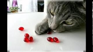 витамины для кошек беафар отзывы