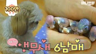 아기 앵무새 6남매의 꿀보디가드 멍멍이 (심쿵주의) | SBS 동물농장x애니멀봐