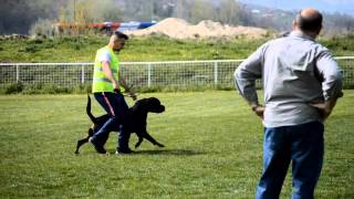 Rottweiler Faryco Terezsky Dvur On Ztp Test