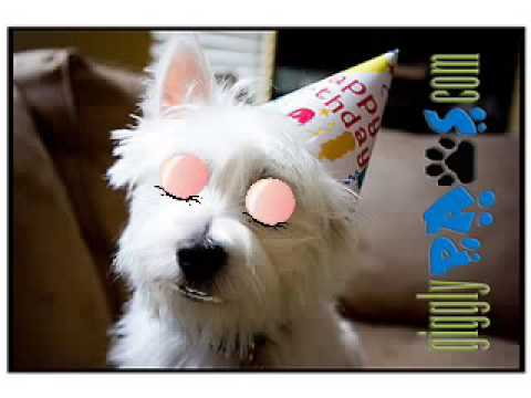 Funny Dog Video Clip Birthday Greetings West Highland Terrier Loves
