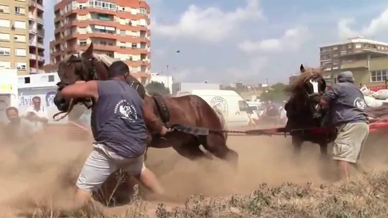 Caballos de tiro y arrastre en silla 26 7 2015 silla youtube for Sillas para caballos