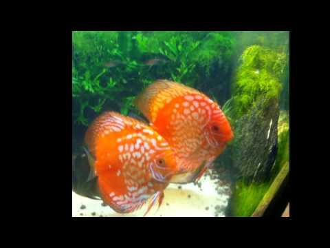 Planted Aquarium In Bangalore