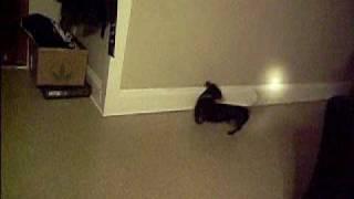 yonder chasen the flast light 1