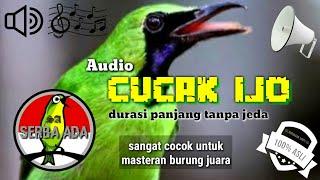 Download Mp3 New!!! Masteran Cucak Ijo Pilihan Juri Senasional Juara No. 1 Full Isian Jernih