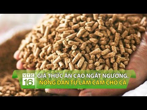 Giá thức ăn cao ngất ngưởng, nông dân tự làm cám cho cá   VTC16