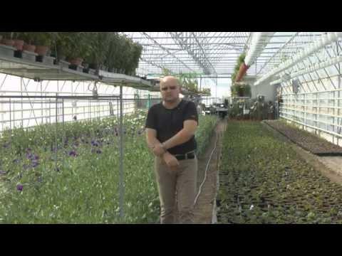 видео: Промышленные теплицы. Вопросы о пленке
