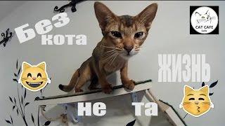 #2 Львов | Cat Cafe во Львове | Место , где живут коты