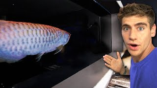 hand-feeding-the-coolest-fish-ive-ever-seen--king-of-diy-fish-room-tour