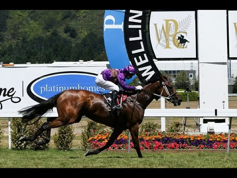 2015 Wellington Cup Day - Horse Races 1 To 9