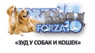 Зуд у собак и кошек