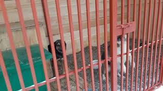 Фонд Умка: собаки встретили снег на участке