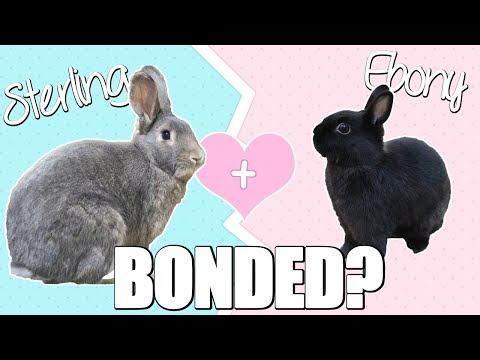 Sterling and Ebony are BONDED?!?!