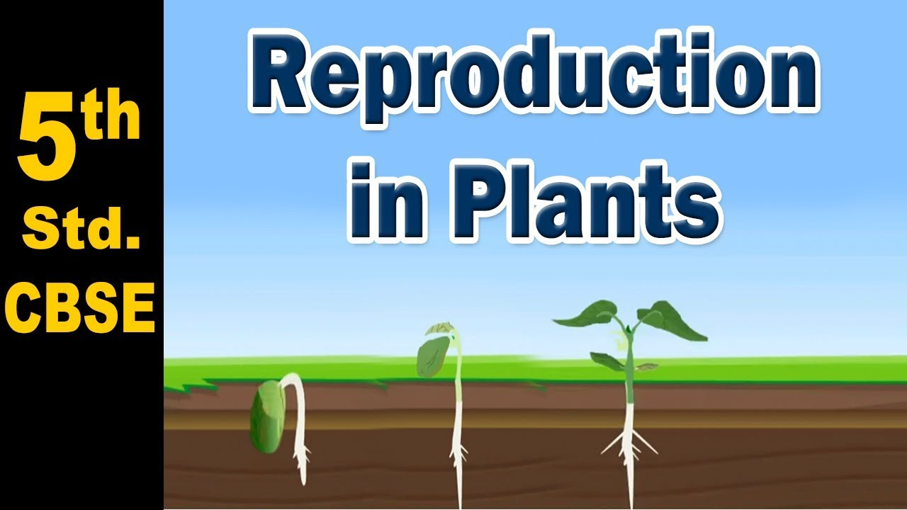 small resolution of Reproduction in Plants   5th Std   Science   CBSE Board   Home Revise -  YouTube