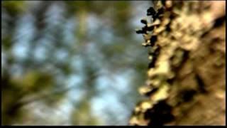 Azad - Phönix Instrumental - Musikvideo
