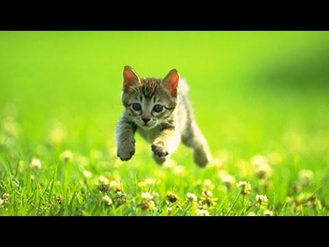 Новое видео 2021 Смешные и забавные котики 😂😍😅
