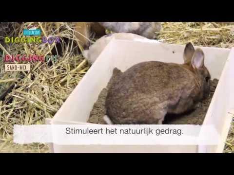 Bunny Nature DiggingBox
