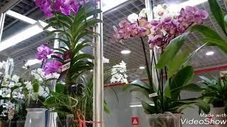 """Обзор орхидей павильон """"Цветоводство"""" на ВДНХ"""