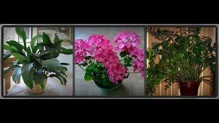 Комнатные цветы для лентяев  (продолжение обзора)
