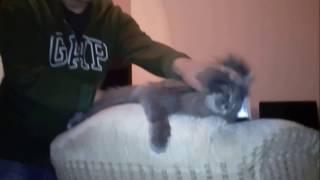 Профессиональный массаж для кошек