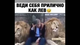 Веди себя как приличный лев