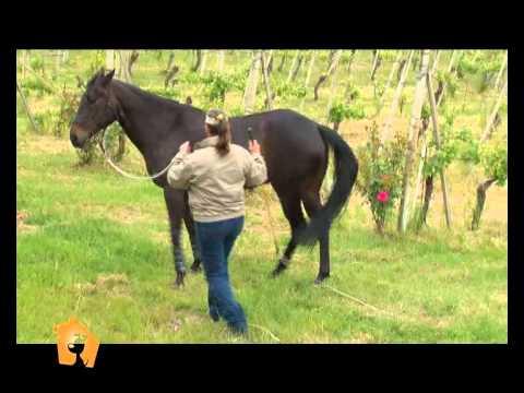 """""""Cani, gatti & c."""" – Servizio del 30 Maggio 2012: comunicazione non verbale tra uomo e cavallo"""
